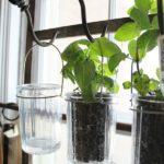 Borcane cu plante aromatice bucatarie