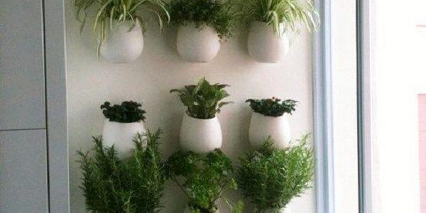 Plante aromatice for Plante x ragnarok