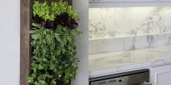 Gradina verciala cu plante aromatice
