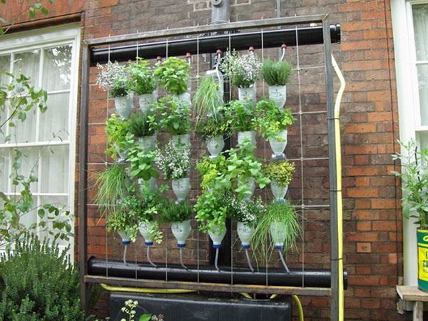 Gradina verticala plante din sticle de plastic