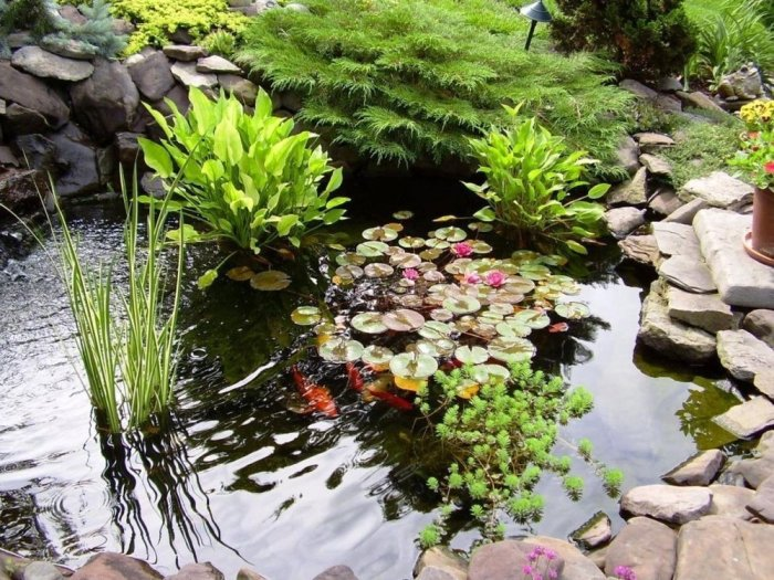 Lac cu plante acvatice