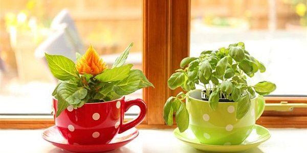 Mici plante aromatice crescute in bucatarie