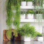 Plante crescute in bucatarie