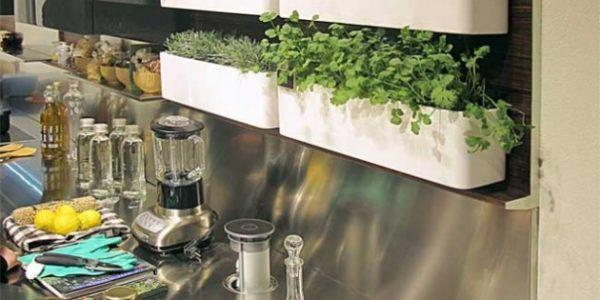 Vase cu plante aromatice bucatarie