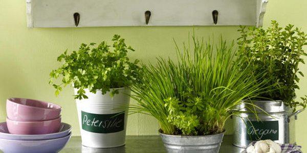 Vase tabla cu plante aromatice