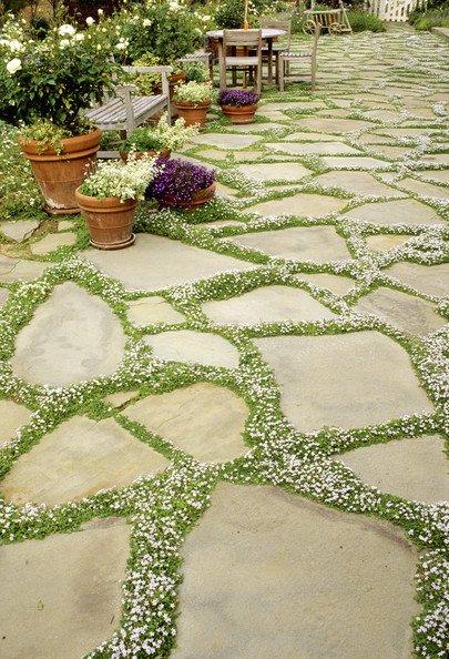 Alee decorata cu plante cu flori