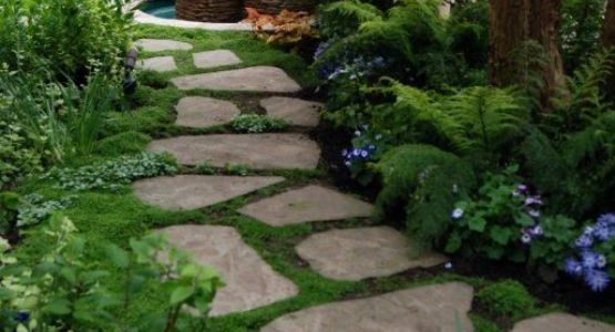 Alee gradina cu piatra naturala si plante taratoare