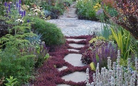 Alee gradina cu plante taratoare mov