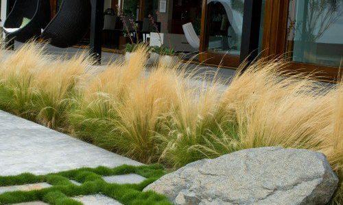 Alee gradina decorata cu plante