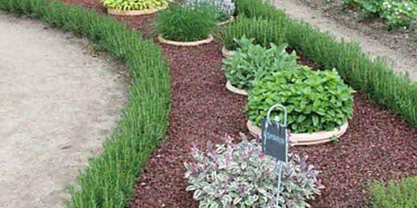 Plante care marginesc gradina